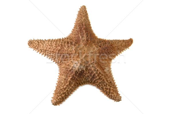 sea starfish Stock photo © taden