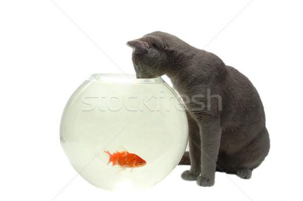 cat and fish Stock photo © taden