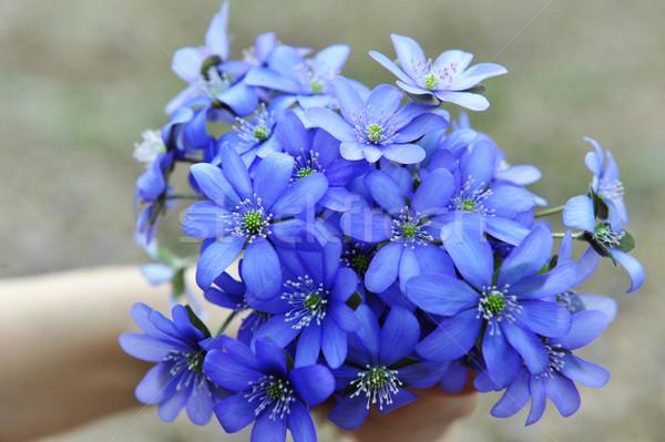 Vrouw Blauw bos blad Stockfoto © taden