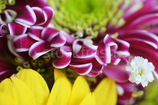 Ramo flores diferente amarillo púrpura agua Foto stock © taden