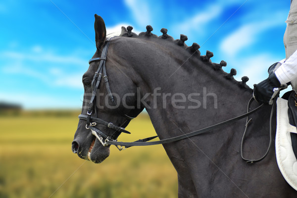 beautiful  black horse with rider Stock photo © taden