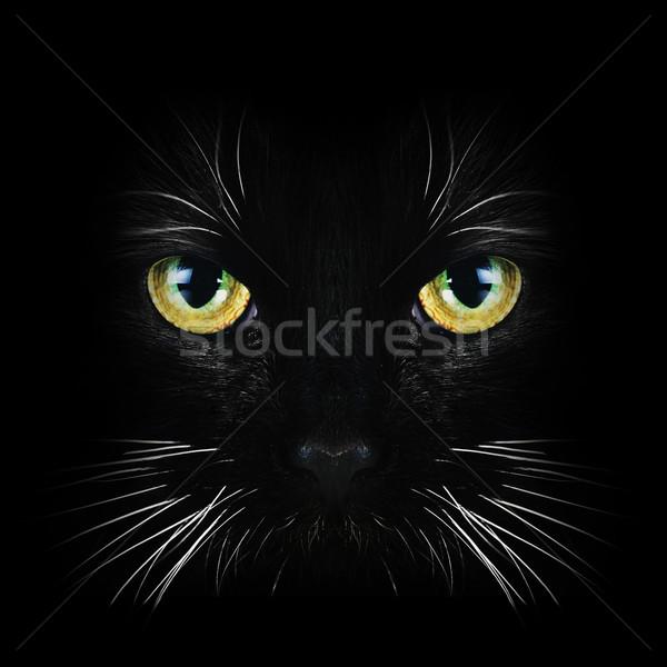 Stock fotó: Fekete · macska · közelkép · portré · haj · állatok · fekete
