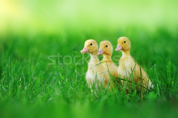 Kicsi zöld fű szabadtér tavasz fű gyermek Stock fotó © taden