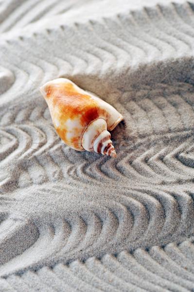 морем песок лет оранжевый оболочки фоны Сток-фото © taden