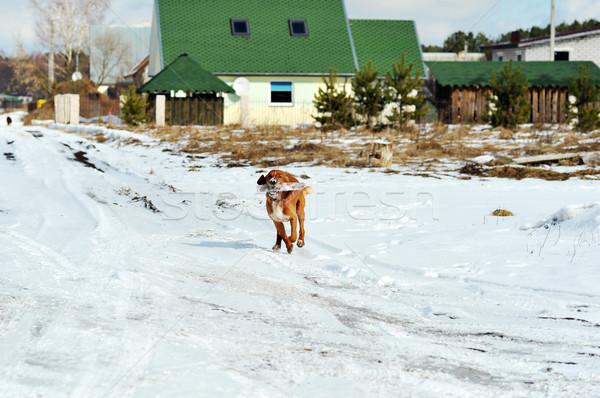 running dog Stock photo © taden