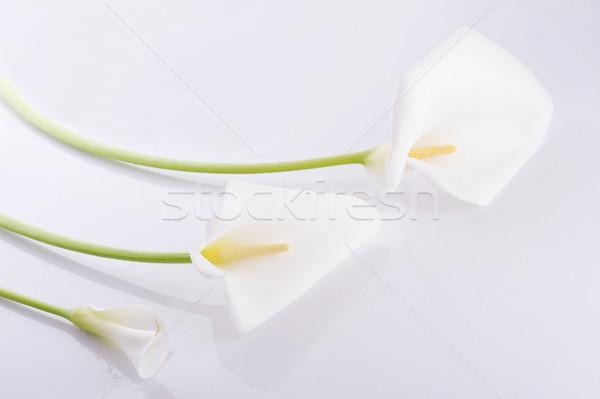 Trzy biały lilie odizolowany charakter Zdjęcia stock © taden