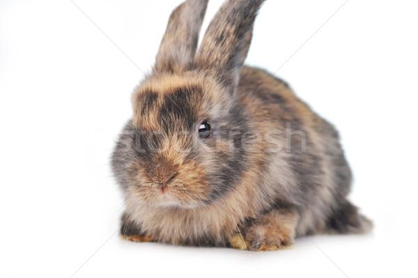 Rosolare soffice coniglio natura animali colore Foto d'archivio © taden