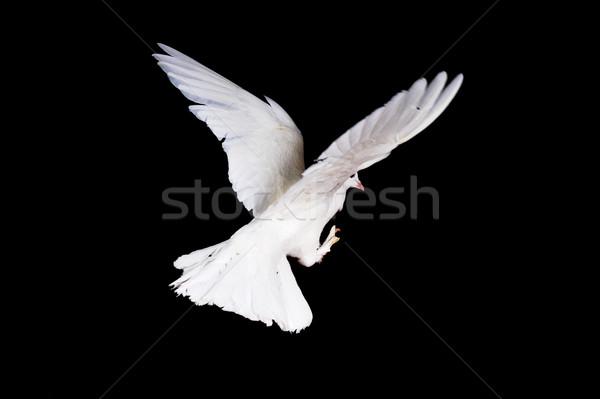 Foto d'archivio: Bianco · piccione · mano · bella · femminile