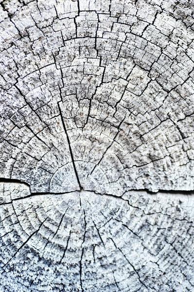 Cross section of tree Stock photo © taden