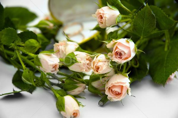 Pierścienie róż obrączki ślub liści tle Zdjęcia stock © taden