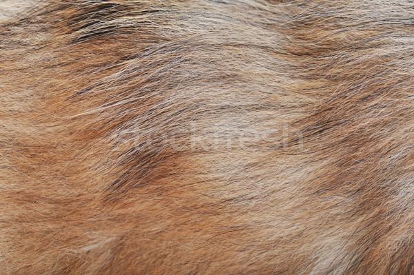 Brązowy pies wełny długo streszczenie ramki Zdjęcia stock © taden