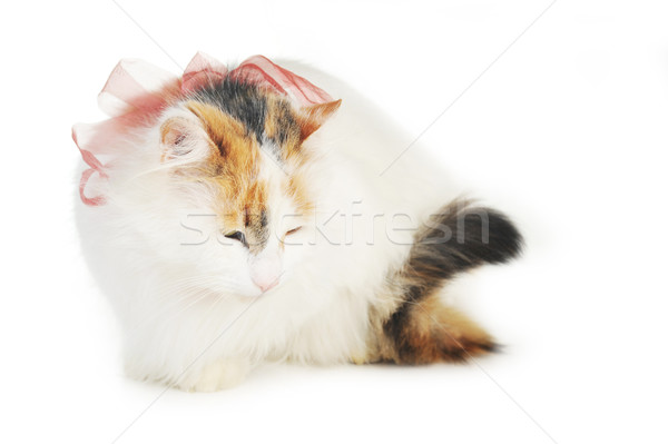 white cat with russet  stains Stock photo © taden