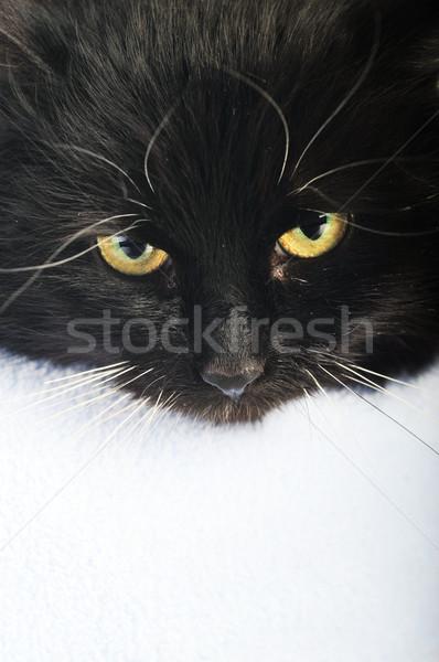 黒猫 嘘 枕 肖像 髪 動物 ストックフォト © taden