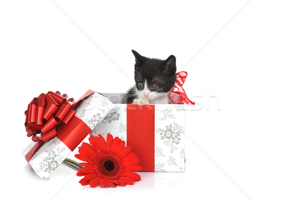 small cute kitten with gift box  Stock photo © taden