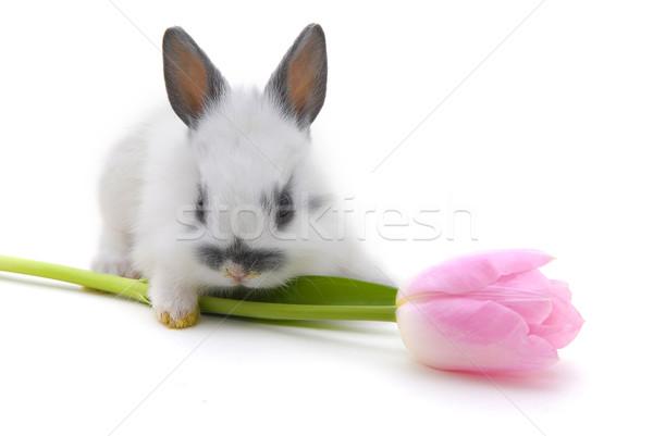 small rabbit  with flower Stock photo © taden