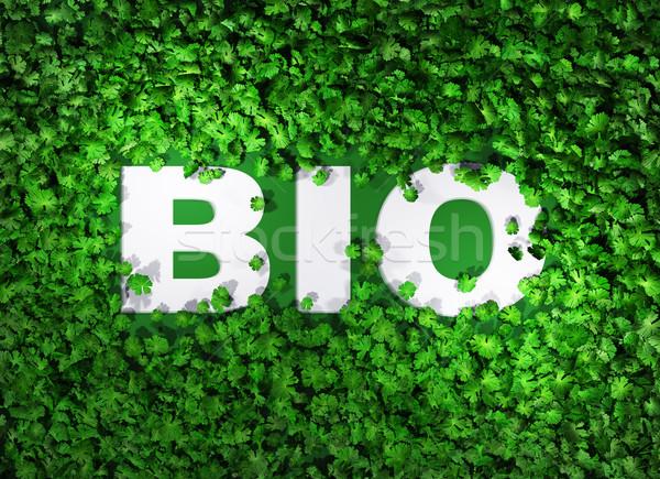 Bio palavra grama topo ver branco Foto stock © TaiChesco