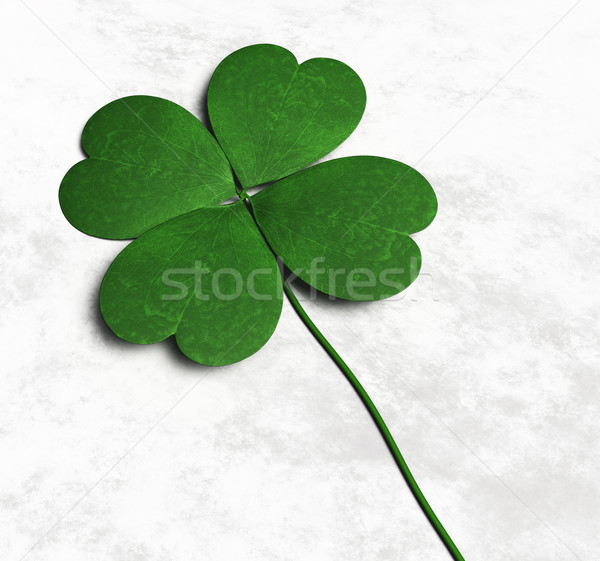 Four-leaf clover on the ground Stock photo © TaiChesco