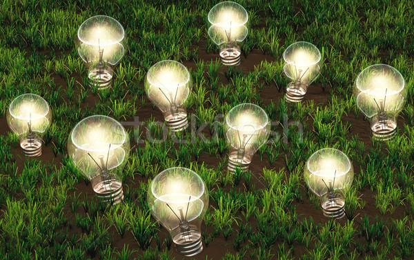 Ampuller farklı boyut büyüyen fikirler çimenli Stok fotoğraf © TaiChesco