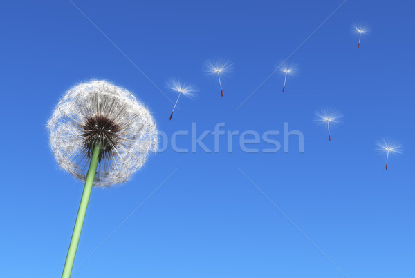 Foto stock: Dandelion · voador · sementes · transportado · vento · blue · sky