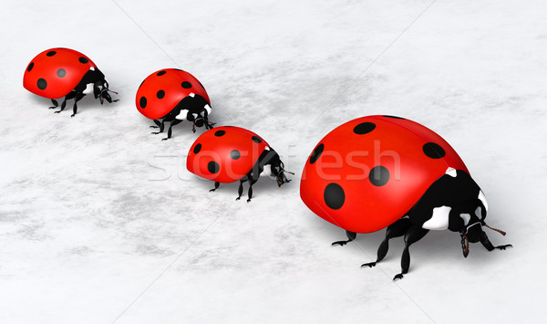 Ladybirds in a row Stock photo © TaiChesco