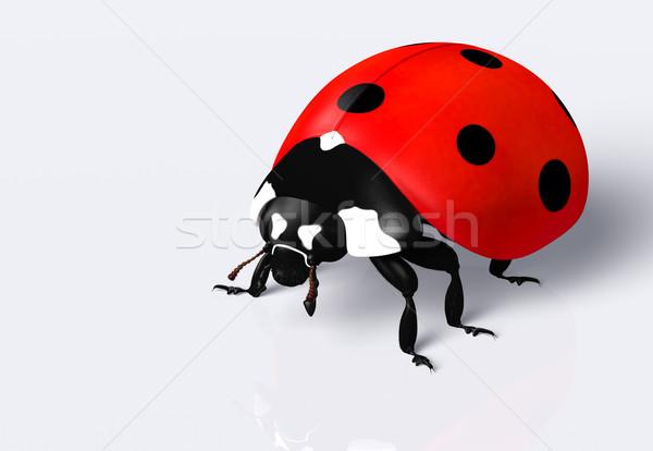 Коровка Ladybug красный черный Места Сток-фото © TaiChesco