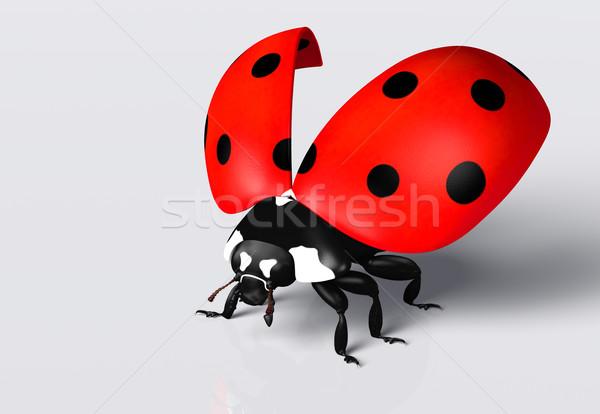 Joaninha abrir joaninha vermelho preto Foto stock © TaiChesco
