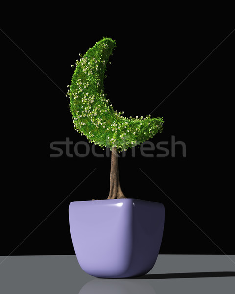 a plant shaped like a crescent moon Stock photo © TaiChesco