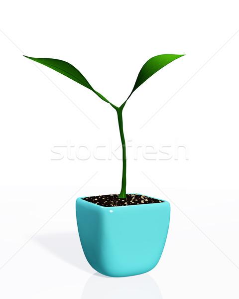 Küçük bitki büyüyen genç iki yaprakları Stok fotoğraf © TaiChesco