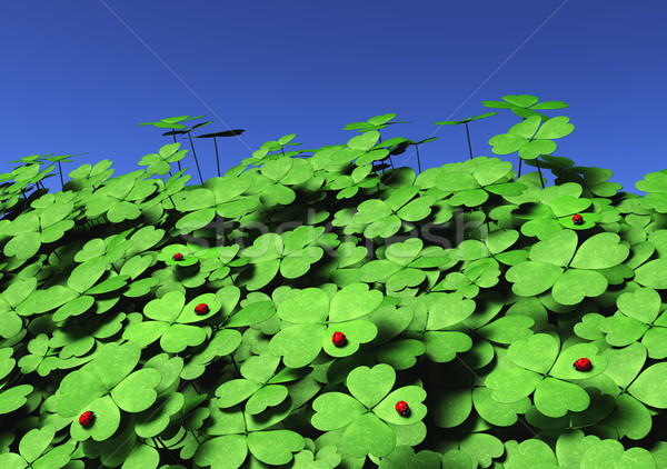 Group of four-leaf clovers with ladybugs Stock photo © TaiChesco