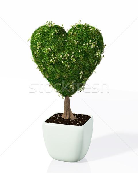 Planta como coração pequeno forma Foto stock © TaiChesco