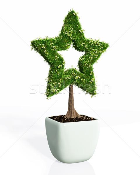 Planta forma estrela pequeno branco pote Foto stock © TaiChesco