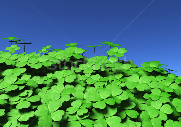 Group of four-leaf clovers Stock photo © TaiChesco