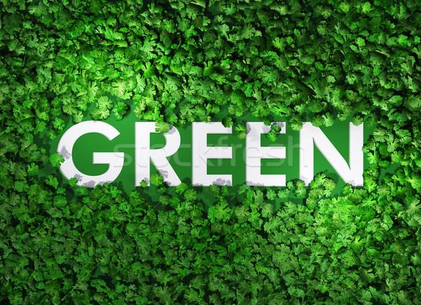 зеленый слово трава Top мнение белый Сток-фото © TaiChesco