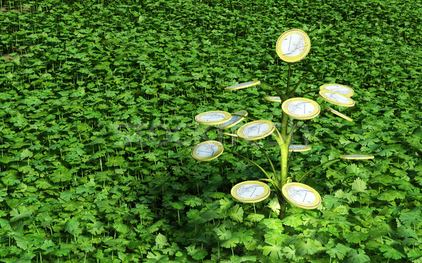 One euro money little tree in the grass Stock photo © TaiChesco
