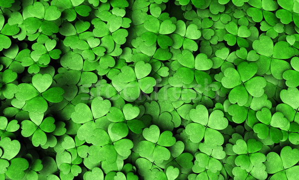 Expanse of four-leaf clovers Stock photo © TaiChesco