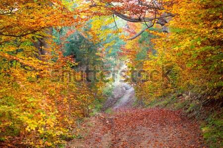 Stil najaar bos kleurrijk trillend bladeren Stockfoto © Taiga