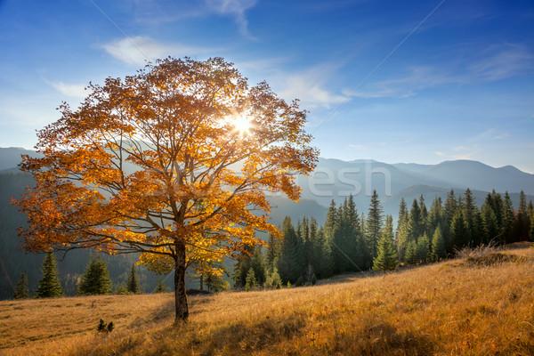 Or arbre montagnes vallée saison d'automne paysage Photo stock © Taiga