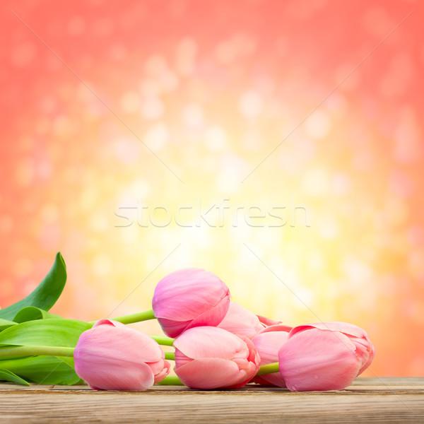 Beautiful  Pink Tulips on magic defocused background Stock photo © Taiga