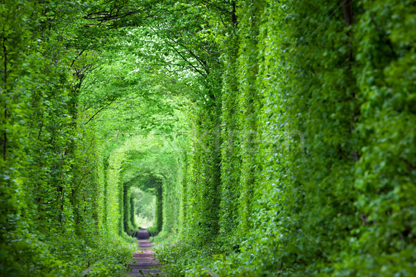 Fantastic Real Tunnel of Love, green trees and the railroad Stock photo © Taiga