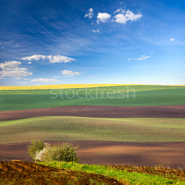 Original Lanscape of Colorful fields  Stock photo © Taiga