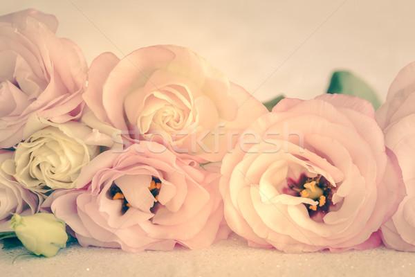 нежный цветами Vintage цветы цветок весны Сток-фото © Taiga