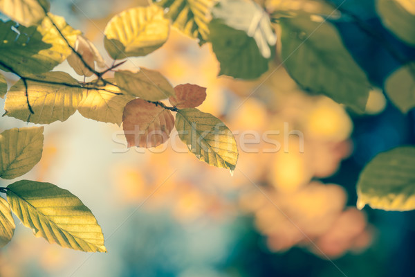 Autumnal leaf vintage background soft focus and color Stock photo © Taiga