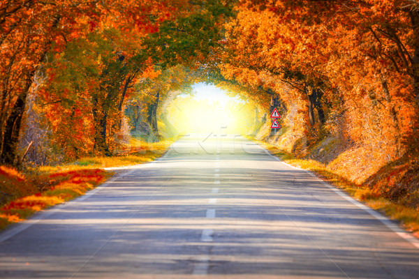 Stock photo: Autumn Fall Road landscape - trees tunne and magic light