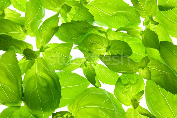Fresh Basil Leaves close-up background / back-lit Stock photo © Taiga