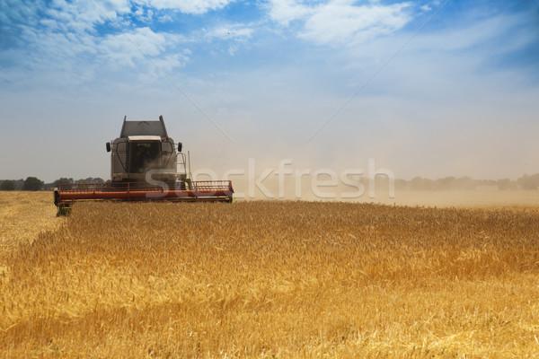 収穫 時間 作業 麦畑 空 食品 ストックフォト © Taiga