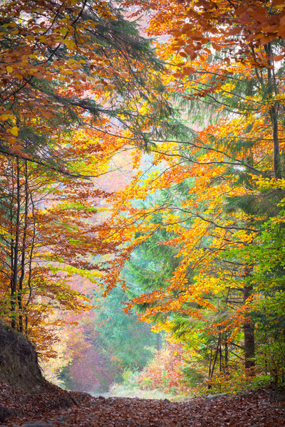Autumn Trees in the silent  park - Beautiful Fall season Stock photo © Taiga