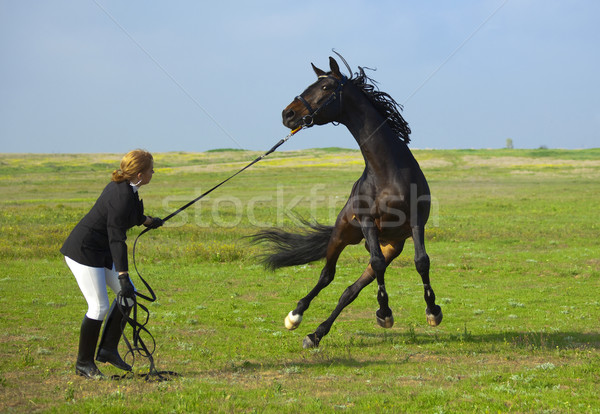 girl trains the horse Stock photo © Taiga