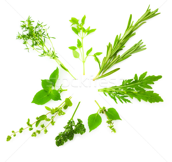 Circle Border of Different  Fresh Spice Herbs /  isolated on whi Stock photo © Taiga