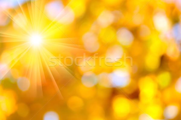 Autumn abstract, fall season background with a magic sun lights Stock photo © Taiga