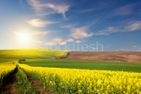 Yellow, green, brown fields and ground road overlooking a valley Stock photo © Taiga